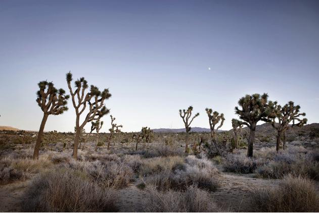 """""""American Wilderness"""" Colectivo Naaro."""
