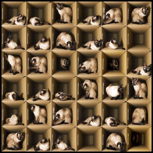 La Gatita de Schrödinger |Fotografía de Alicia Moneva | Compra arte en Flecha.es