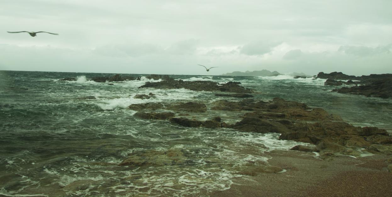 GAVIOTAS EN VUELO (de la serie Islas Cies. Foto nº 18) |Fotografía de Luis Arbex | Compra arte en Flecha.es