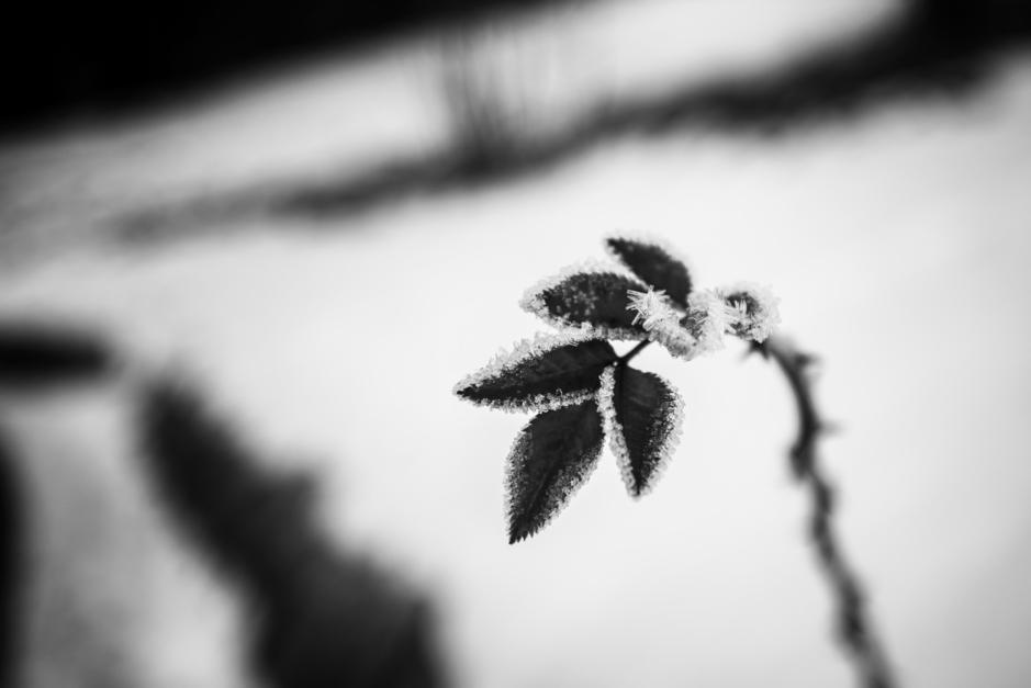 Frío |Fotografía de Iñigo Echenique | Compra arte en Flecha.es