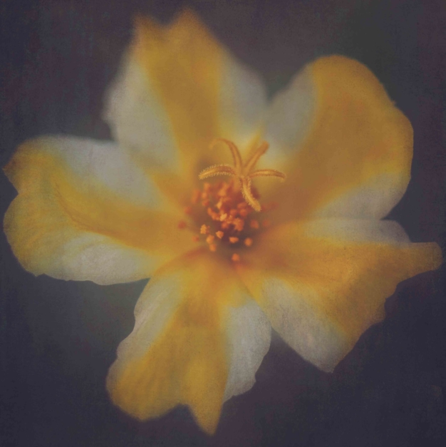 La estrella amarilla |Fotografía de Eva Ortiz | Compra arte en Flecha.es