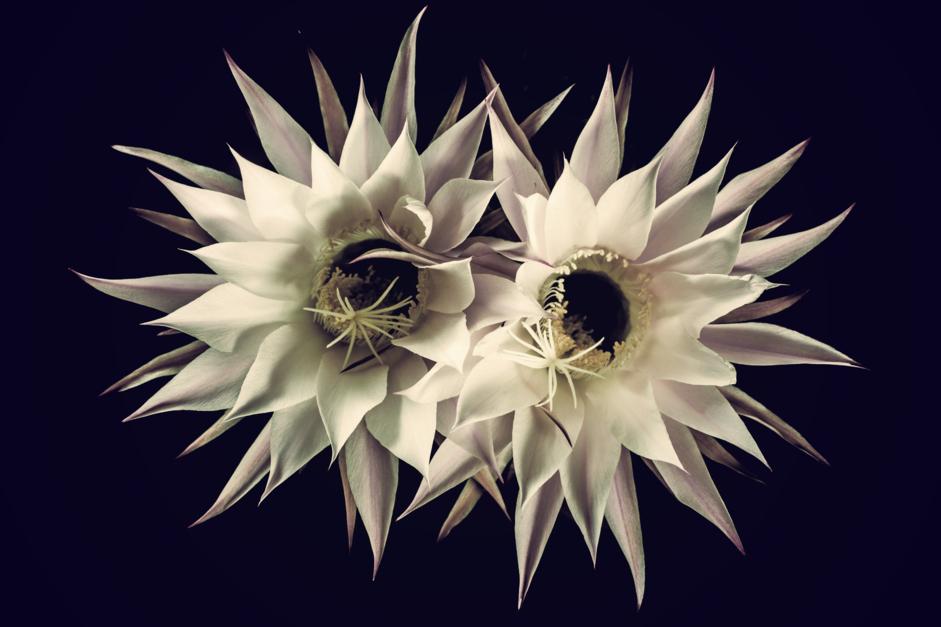 Cactus love |Digital de Eva Ortiz | Compra arte en Flecha.es