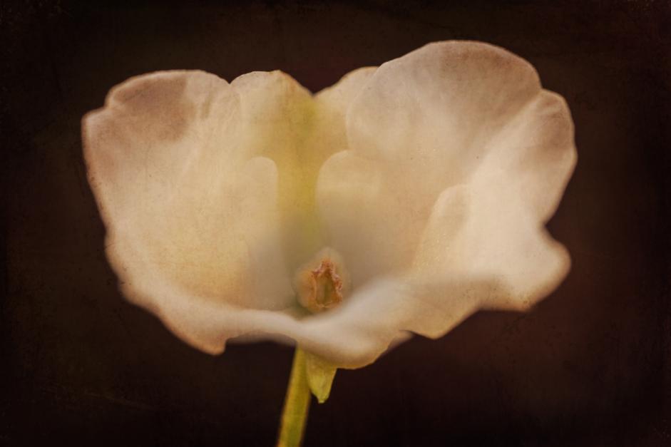 Flower porn |Fotografía de Eva Ortiz | Compra arte en Flecha.es