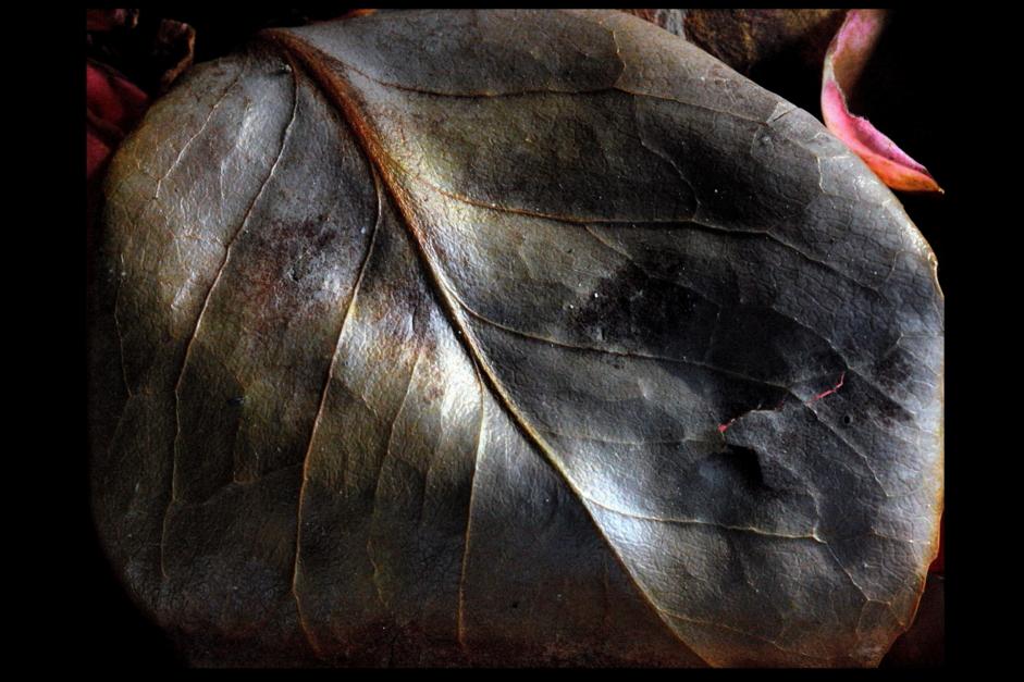 Hoja |Digital de Juan de la Sota | Compra arte en Flecha.es