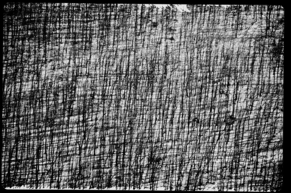 Bosque |Digital de Juan de la Sota | Compra arte en Flecha.es