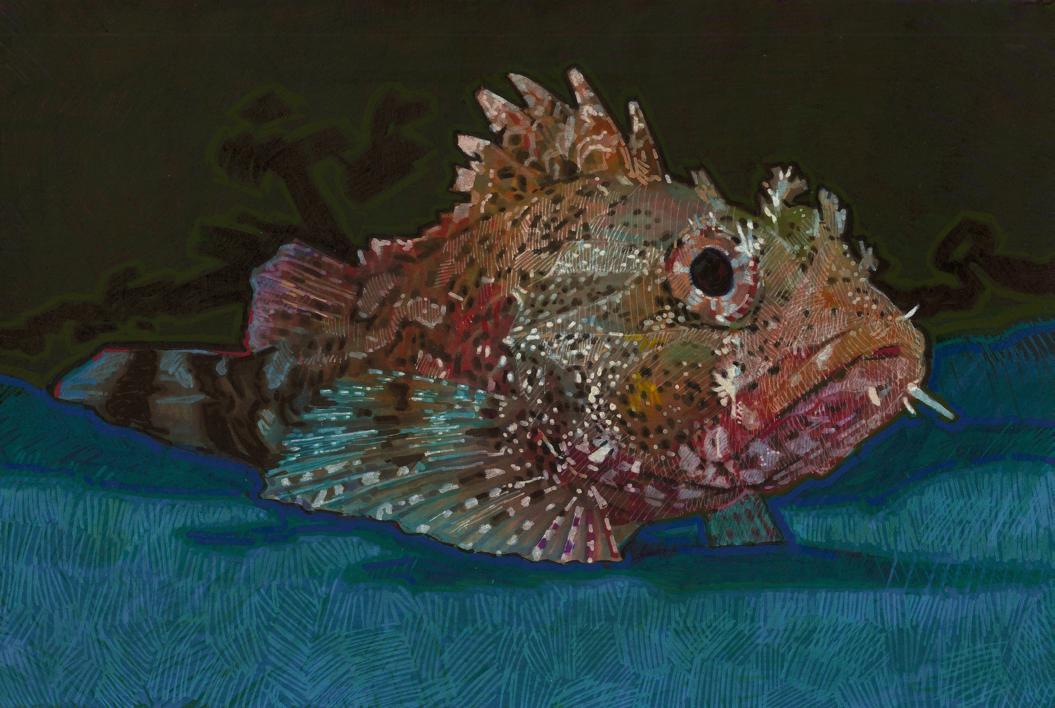 Red Scorpion Fish |Dibujo de Carlos J. Márquez | Compra arte en Flecha.es