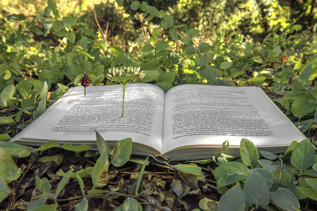 El libro y la primavera |Fotografía de Leticia Felgueroso | Compra arte en Flecha.es