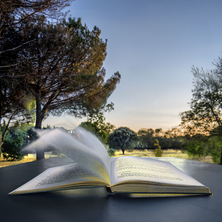 El libro y el viento |Fotografía de Leticia Felgueroso | Compra arte en Flecha.es