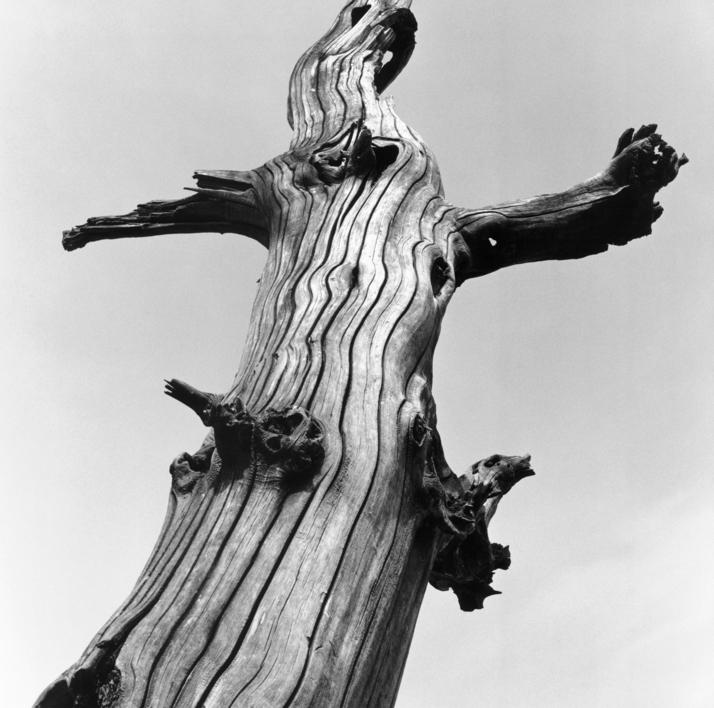 Los restos de Cristo  Fotografía de Casimiro Martinferre   Compra arte en Flecha.es