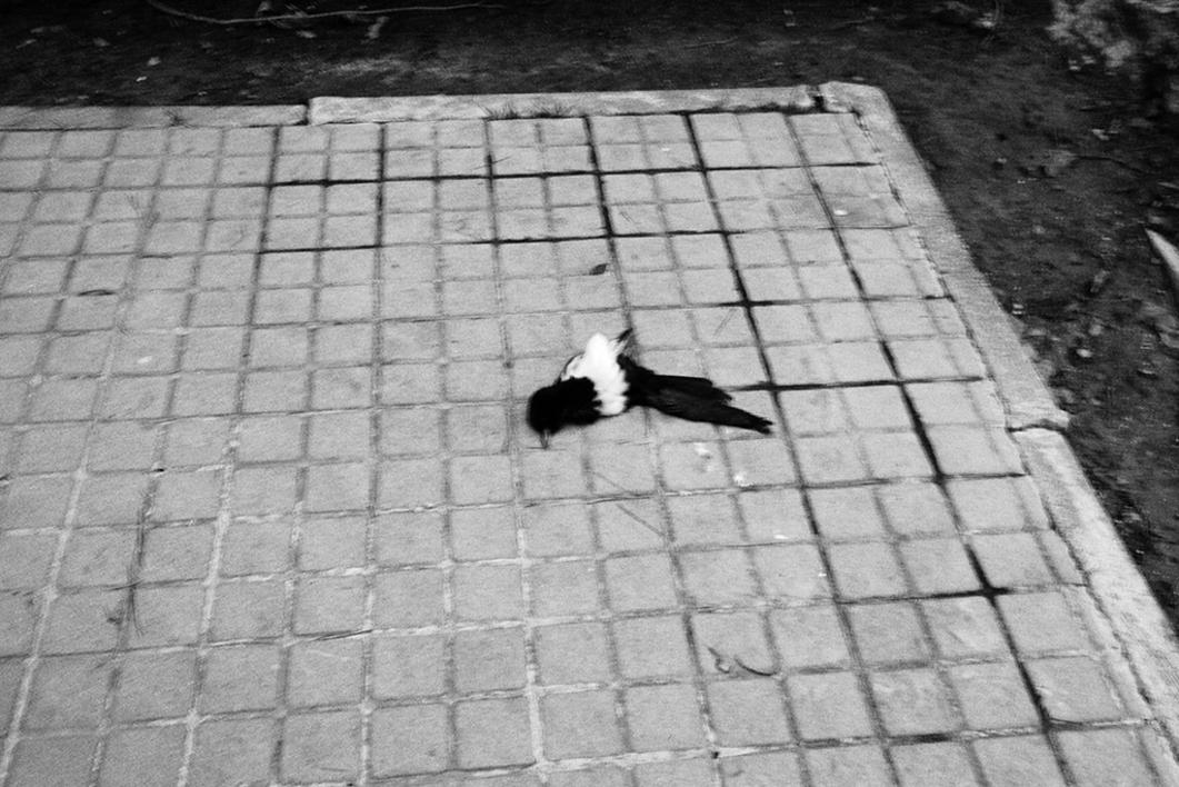 La Maleta de Ulises #9 |Fotografía de José M. Feito | Compra arte en Flecha.es