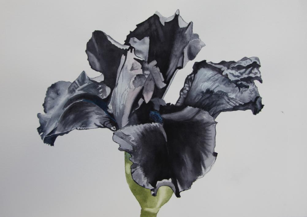Lirio Negro  Pintura de Miguel Ortega Mesa   Compra arte en Flecha.es