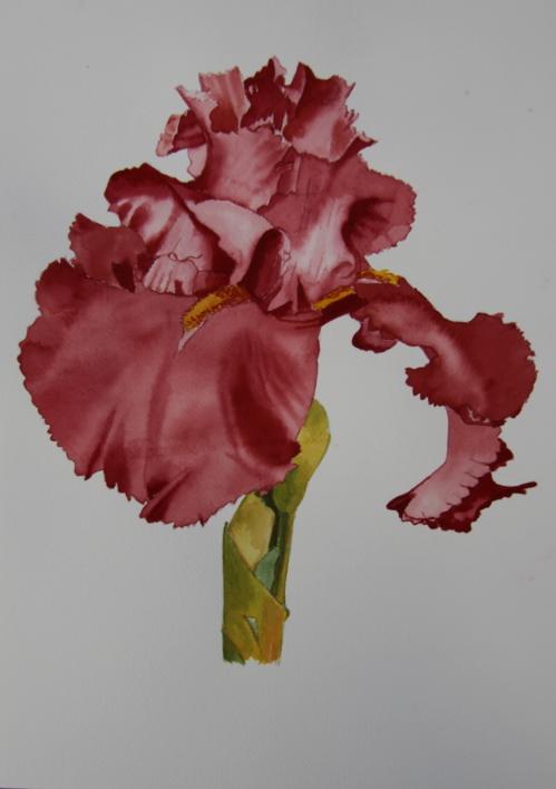 Lirio Rojo |Pintura de Miguel Ortega Mesa | Compra arte en Flecha.es