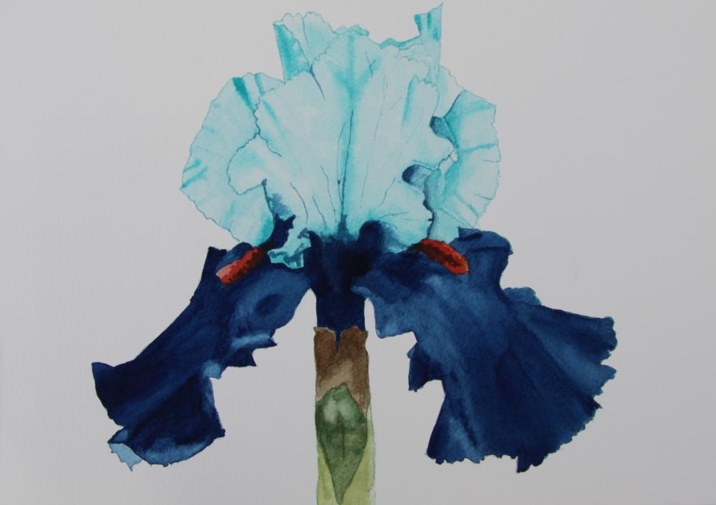 Lirio Azul Frontal |Pintura de Miguel Ortega Mesa | Compra arte en Flecha.es