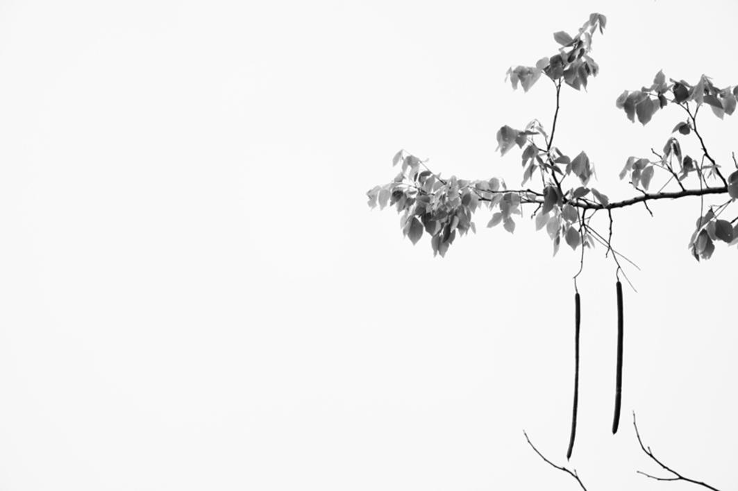 El árbol de Pakse |Fotografía de Verónica Velasco Barthel | Compra arte en Flecha.es
