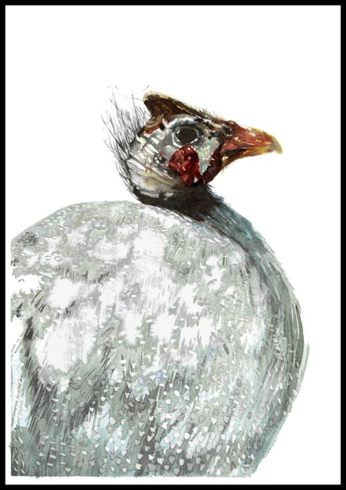Gallina de Guinea |Pintura de Macarena Garví | Compra arte en Flecha.es