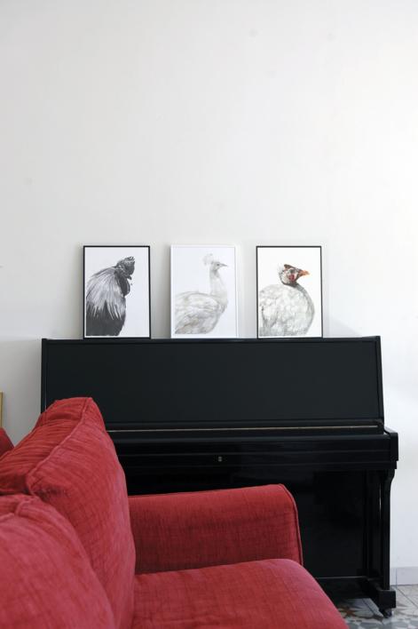 Gallo negro de Indonesia | Dibujo de Macarena Garví | Compra arte en Flecha.es
