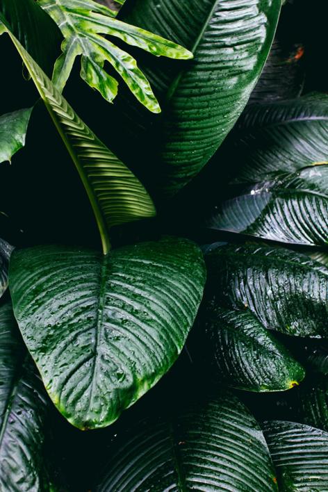 Tropical I |Digital de Daniel Comeche | Compra arte en Flecha.es