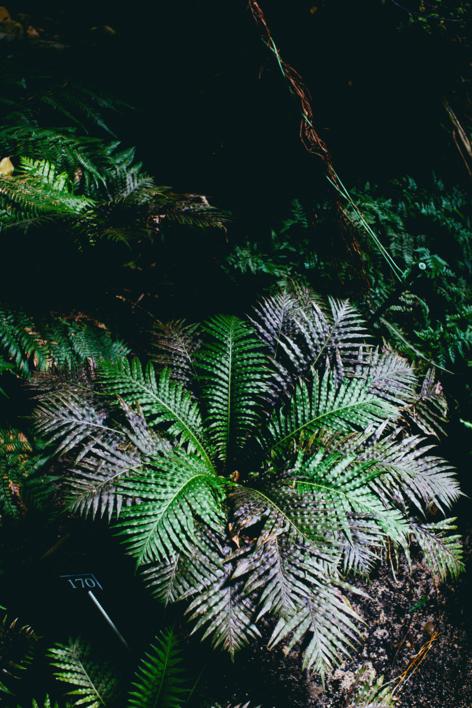 Tropical II |Digital de Daniel Comeche | Compra arte en Flecha.es