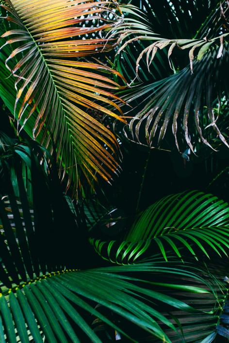 Subtropical I |Digital de Daniel Comeche | Compra arte en Flecha.es