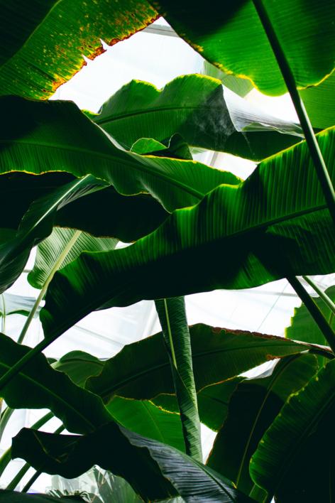 Subtropical II |Digital de Daniel Comeche | Compra arte en Flecha.es