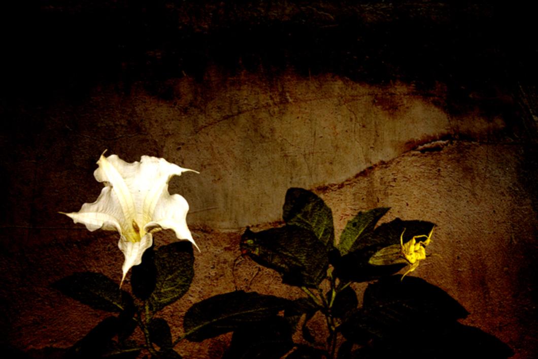 Narures  Fotografía de Víctor Vilamajó   Compra arte en Flecha.es