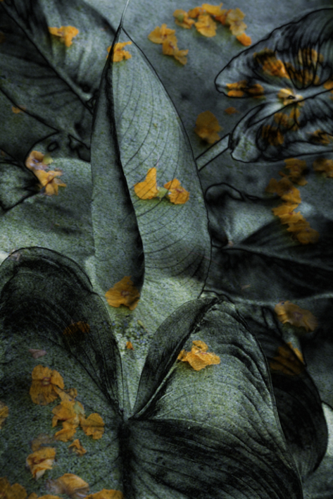 Natures  Fotografía de Víctor Vilamajó   Compra arte en Flecha.es