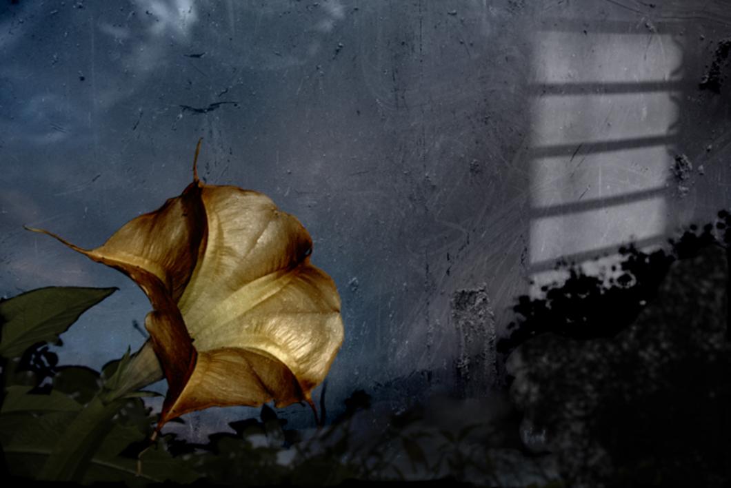 Natures |Fotografía de Víctor Vilamajó | Compra arte en Flecha.es