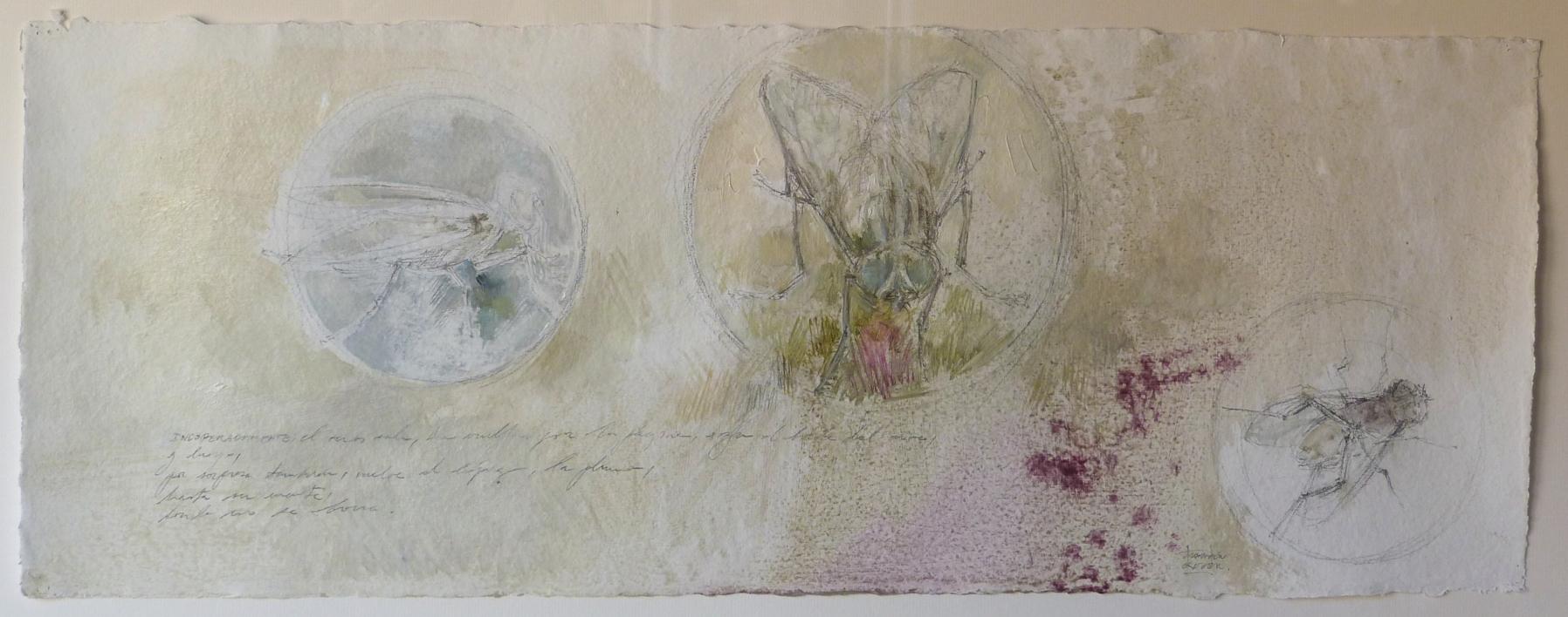 """Insectos"" |Dibujo de Carmen Roger | Compra arte en Flecha.es"