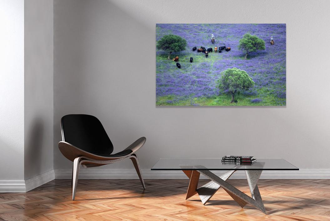 Toros preparados para la lidia | Fotografía de Peter Müller Peter | Compra arte en Flecha.es