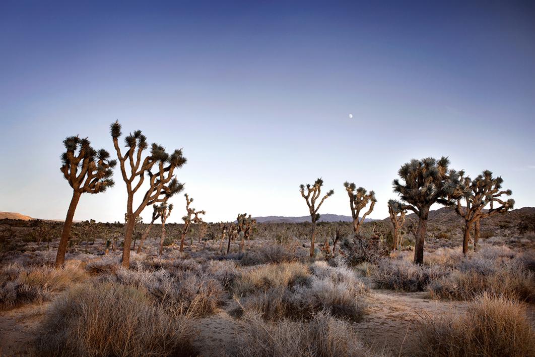 American wilderness |Fotografía de Naaroo | Compra arte en Flecha.es