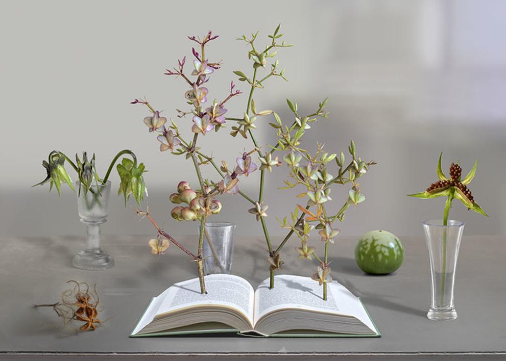 Humboldt y la invención de la Naturaleza |Fotografía de Leticia Felgueroso | Compra arte en Flecha.es