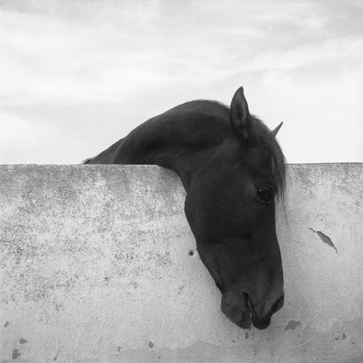 Caballo |Fotografía de Raúl Urbina | Compra arte en Flecha.es