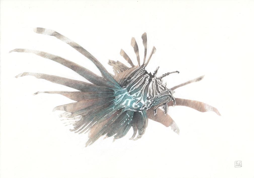 Lionfish 02  Dibujo de Carlos J. Márquez   Compra arte en Flecha.es