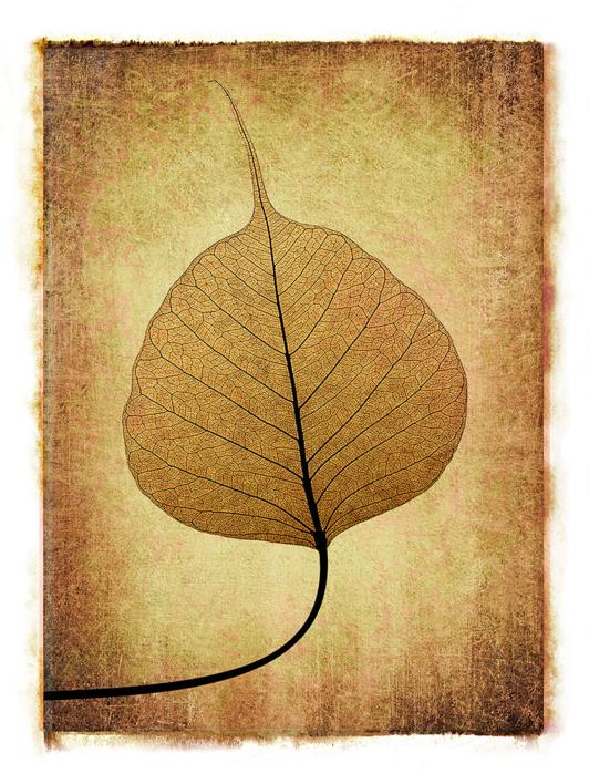 Leaf Lace  #04 |Digital de Andy Sotiriou | Compra arte en Flecha.es