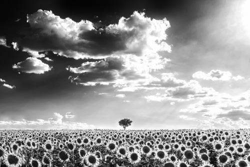 La Soledad |Fotografía de Iñigo Echenique | Compra arte en Flecha.es