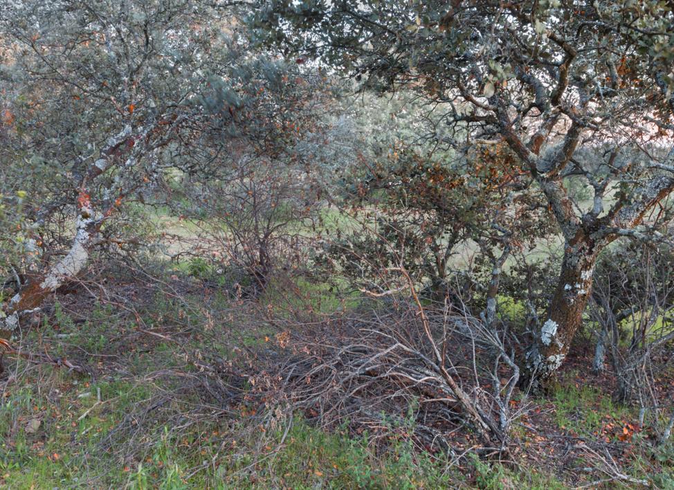 Encina y ramas secas |Fotografía de Angélica Suela de la LLave | Compra arte en Flecha.es