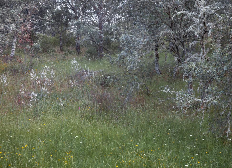 Chaparros y flores blancas |Fotografía de Angélica Suela de la LLave | Compra arte en Flecha.es