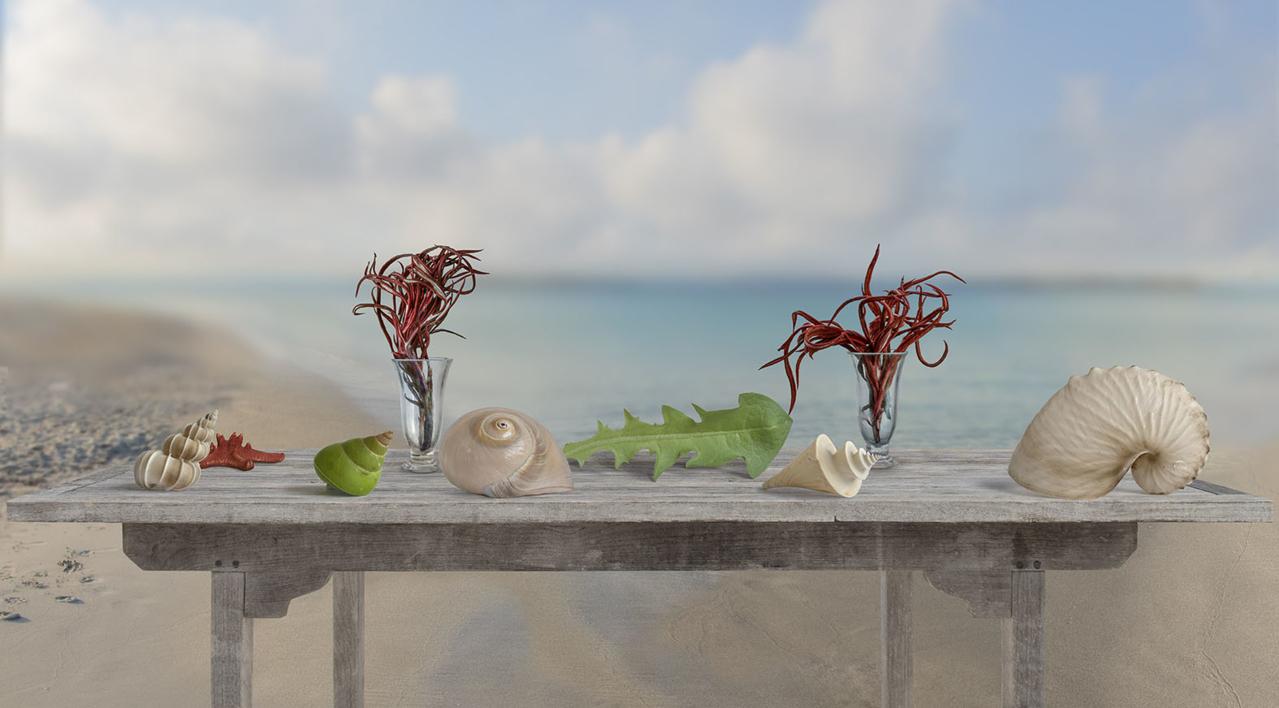 Bodegón marino |Fotografía de Leticia Felgueroso | Compra arte en Flecha.es