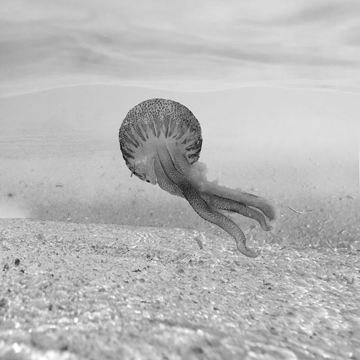 Medusa blanco y negro |Fotografía de Leticia Felgueroso | Compra arte en Flecha.es