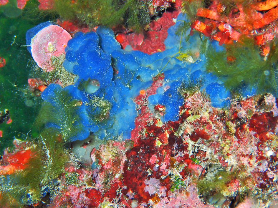 Color sobre roca  Fotografía de Beatriz García Infante   Compra arte en Flecha.es