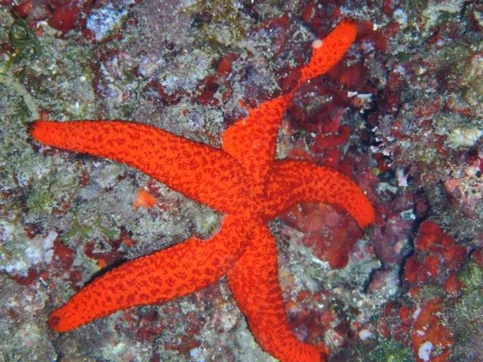 Estrella de los mares |Fotografía de Beatriz García Infante | Compra arte en Flecha.es