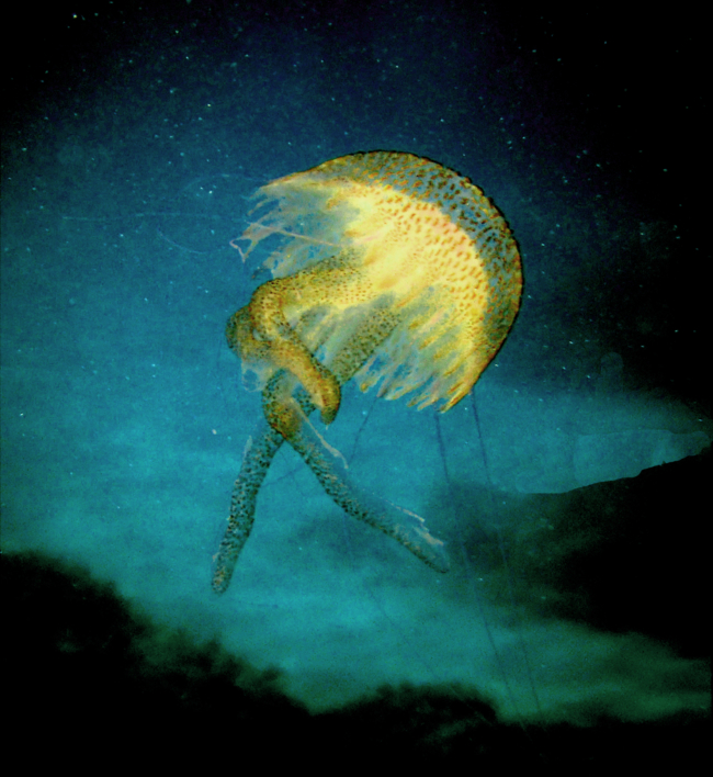 Baila Medusa |Fotografía de Beatriz García Infante | Compra arte en Flecha.es