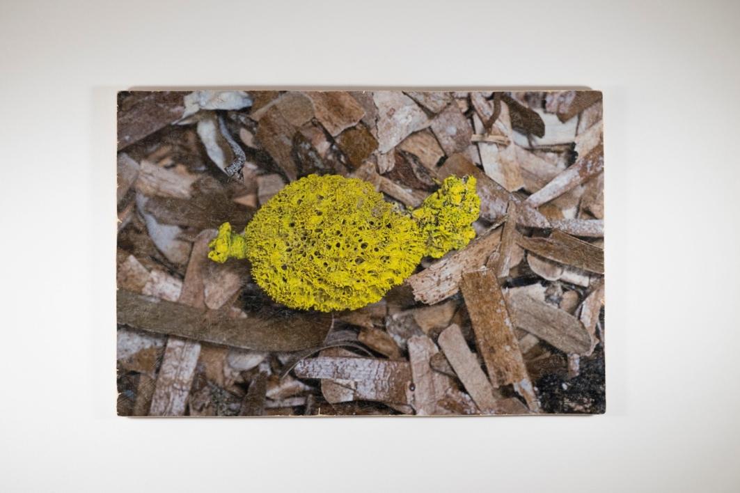 Algues 18 |Digital de Salvador Llinàs | Compra arte en Flecha.es