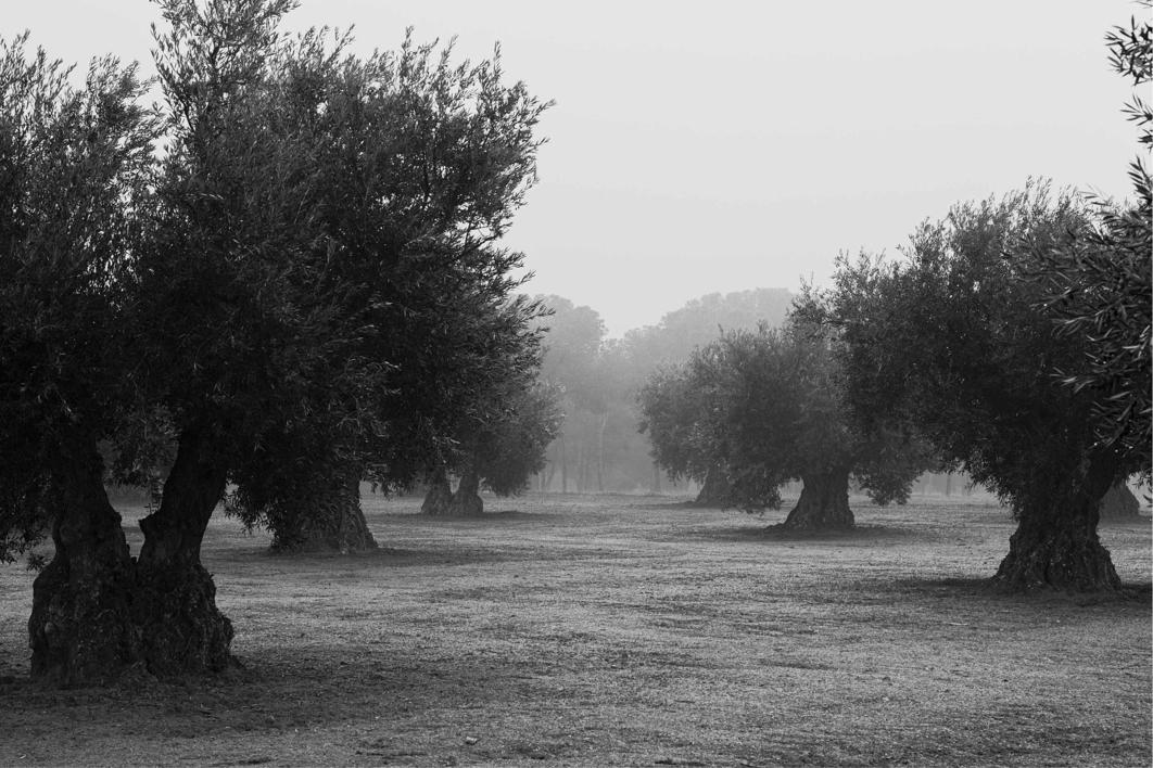 Melancolía 3 |Fotografía de Ana González | Compra arte en Flecha.es