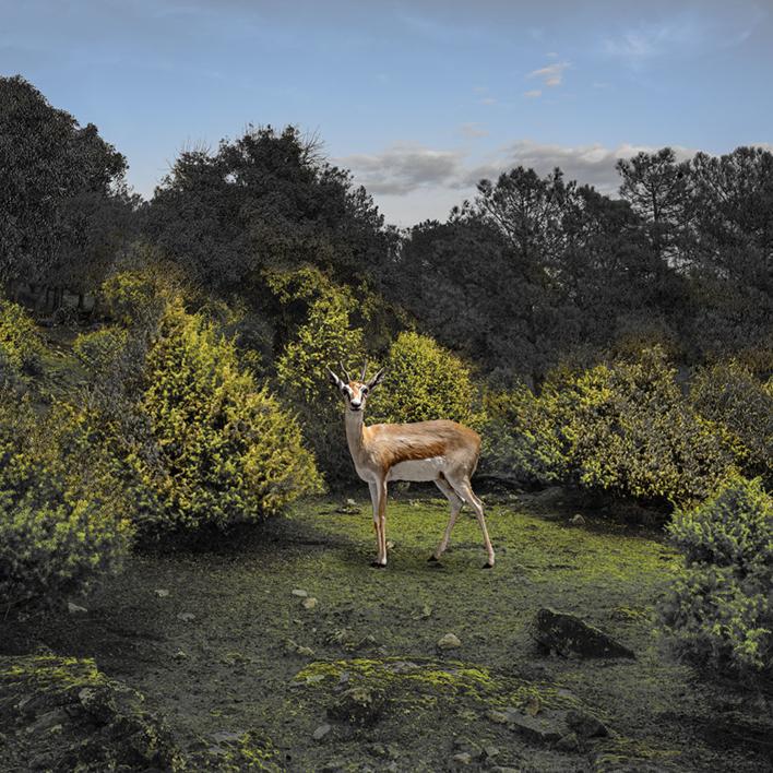 En el claro de los enebros  Fotografía de Leticia Felgueroso   Compra arte en Flecha.es