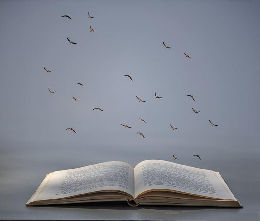 Libro abierto |Fotografía de Leticia Felgueroso | Compra arte en Flecha.es