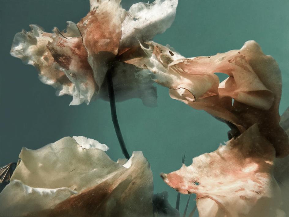 Entropía nº4 |Fotografía de Ruth Peche | Compra arte en Flecha.es