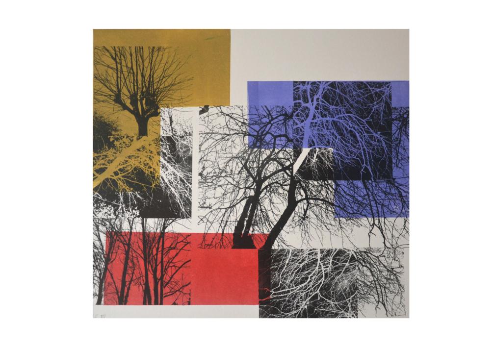 El bosque translúcido 2 V/E III |Obra gráfica de Josep Pérez González | Compra arte en Flecha.es