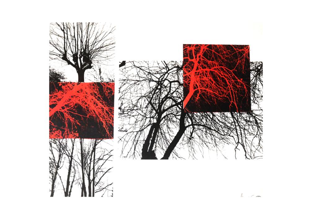 El bosque translúcido 15 V/E I |Obra gráfica de Josep Pérez González | Compra arte en Flecha.es