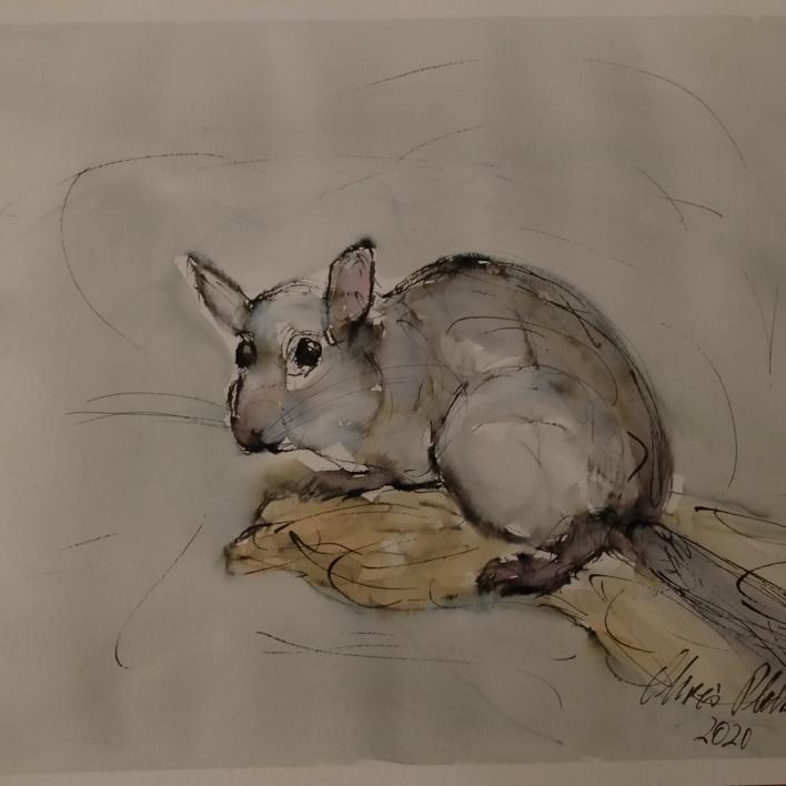 Lirón careto |Dibujo de OliverPlehn-Artist | Compra arte en Flecha.es